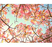 Spring Splendor Photographic Print