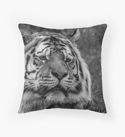 Wait and Watch Throw Pillow