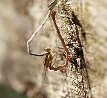 Dragonfly in love by Lavanda