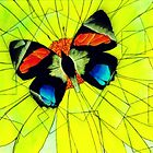 Butterfly on Flower Oil Pastel by Jonesy235