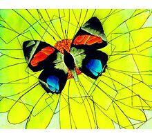 Butterfly on Flower Oil Pastel Photographic Print
