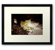 Maple leaf in a puddle Framed Print