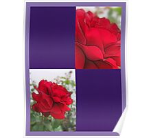 Red Rose Edges Blank Q9F0 Poster