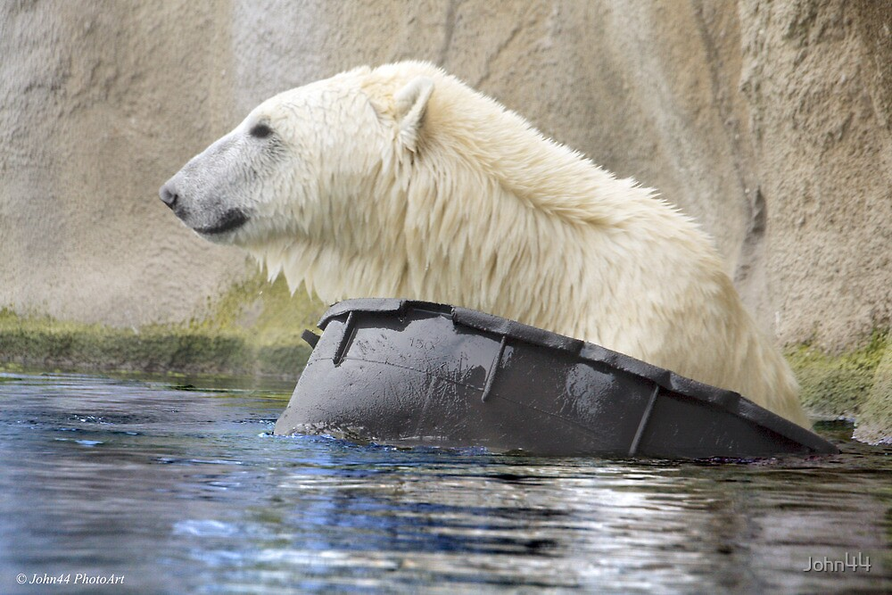 ...Polar bear 'afloat'  [FEATURED] by John44