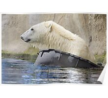 ...Polar bear 'afloat'  [FEATURED] Poster