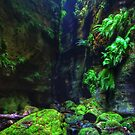 Claustral Canyon - Blue Mountains National Park by Marilyn Harris