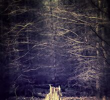Deep in the woods by Pascal Deckarm