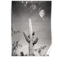 Cactus X2 Holga Double Exposure Photo Poster