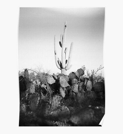 Saguaro Cactus Holga Photo Poster