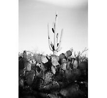Saguaro Cactus Holga Photo Photographic Print