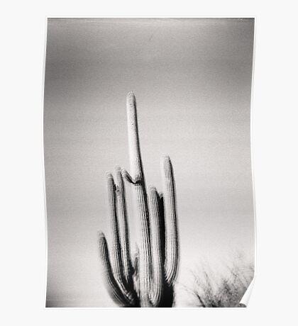 Saguaro Holga Photo Poster