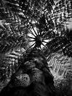 Scary Tree- Mt Lofty Tree Fern by Ben Loveday