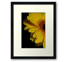 Sultry yellow gerbera in the dark II Framed Print