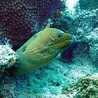 Green Moray Eel  by Amy McDaniel