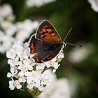 small copper by ma-fleur-art