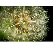 Dandelion - 'clock flower' Photographic Print