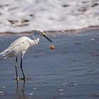 Egret Drop by Paul Wolf