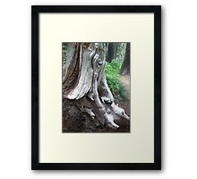 Elephant in the forest Framed Print