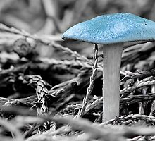 Clitosybe Odora, Aniseed Toadstool by relayer51