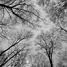 Spring Trees - Black and White 3 by Tracy Wazny