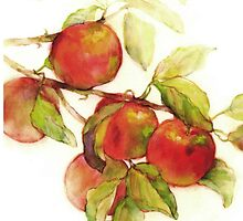 autumn apples watercolor by idella