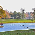 Autumn on the Pond by John Butler