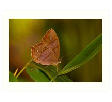 butterfly and bamboo leaves Art Print