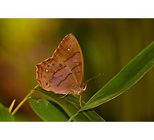 butterfly and bamboo leaves Photographic Print