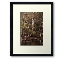 Eucalyptus trees, Standing Strong By Lorraine McCarthy Framed Print
