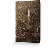 Eucalyptus trees, Standing Strong By Lorraine McCarthy Greeting Card