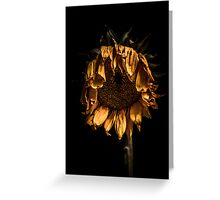 A tired sunflower Greeting Card