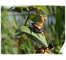 Beetle Juice Poster