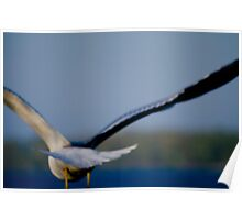 Flying Gull Poster
