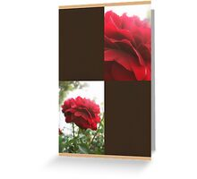 Red Rose with Light 1 Blank Q3F0 Greeting Card