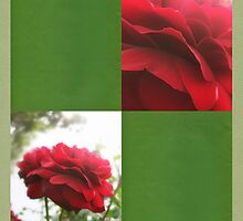 Red Rose with Light 1 Blank Q5F0 by Christopher Johnson