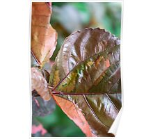 coloured foliage Poster