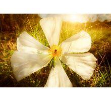 White Bright Photographic Print