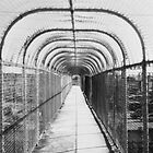 Fenced In by Bill Wetmore