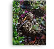 Disney Duck Canvas Print
