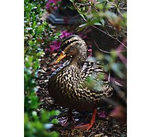 Disney Duck Photographic Print
