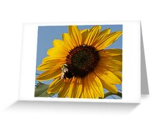 Sunflowe and Bee Greeting Card