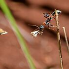 Jumping Ant 1 by Bami