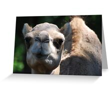 Guess What Day It Is Greeting Card