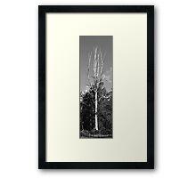 Old gum tree Framed Print