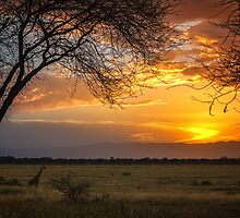 Manyara Ranch Sunset by Owed To Nature