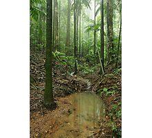 Rainforest stream. Maiala. D'Aguilar Range.  Photographic Print