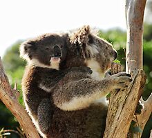 How much can a koala bear? by Leanne Churchill
