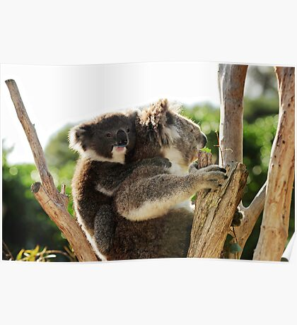 How much can a koala bear? Poster