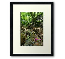 Lillipilli fruit in stream. D'Aguilar range. Queensland. Framed Print