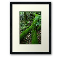 Old man of the forest. D'Aguilar range. Queensland. Framed Print